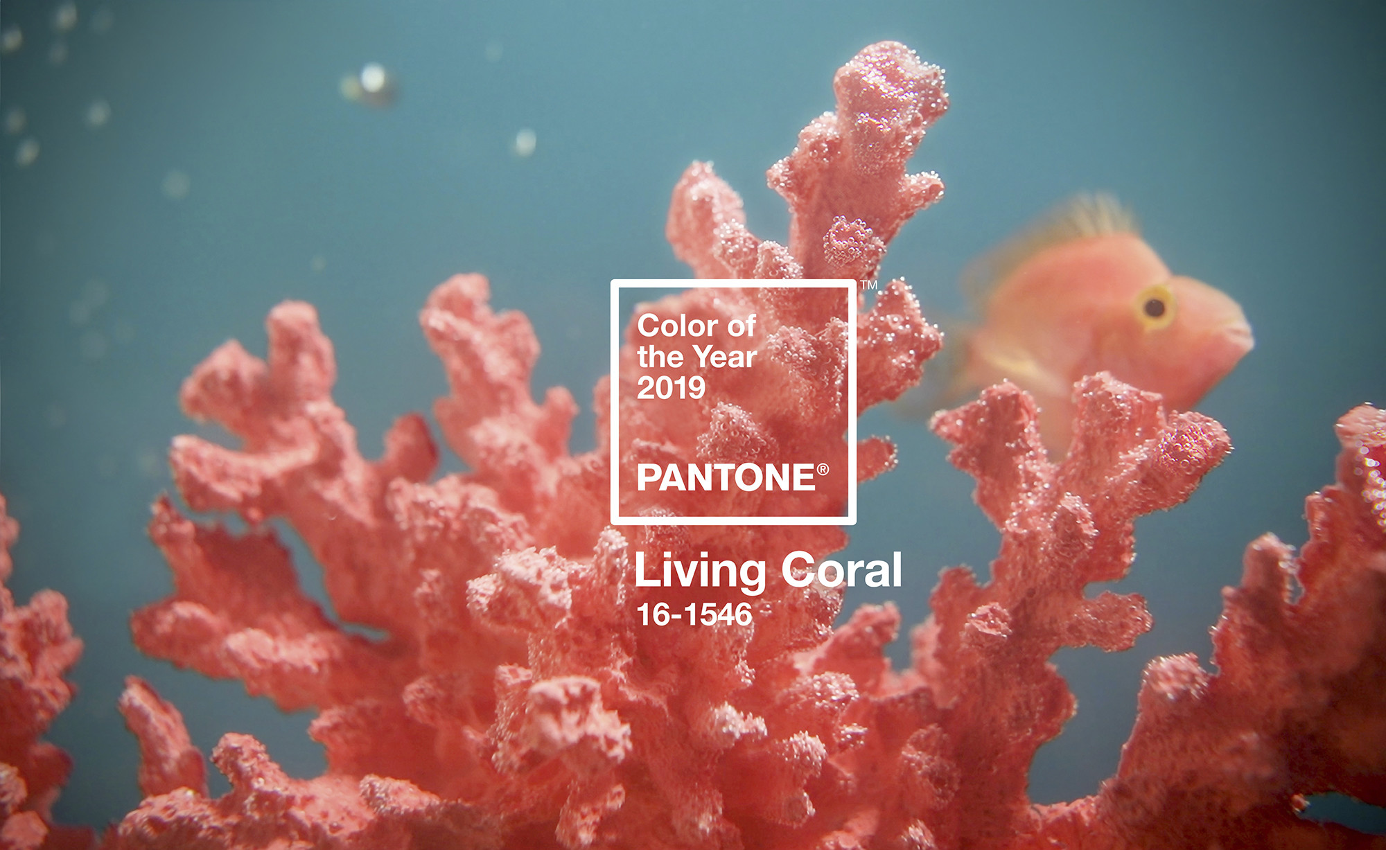 2019 Pantone living coral-鯊客科技SEO品牌經營