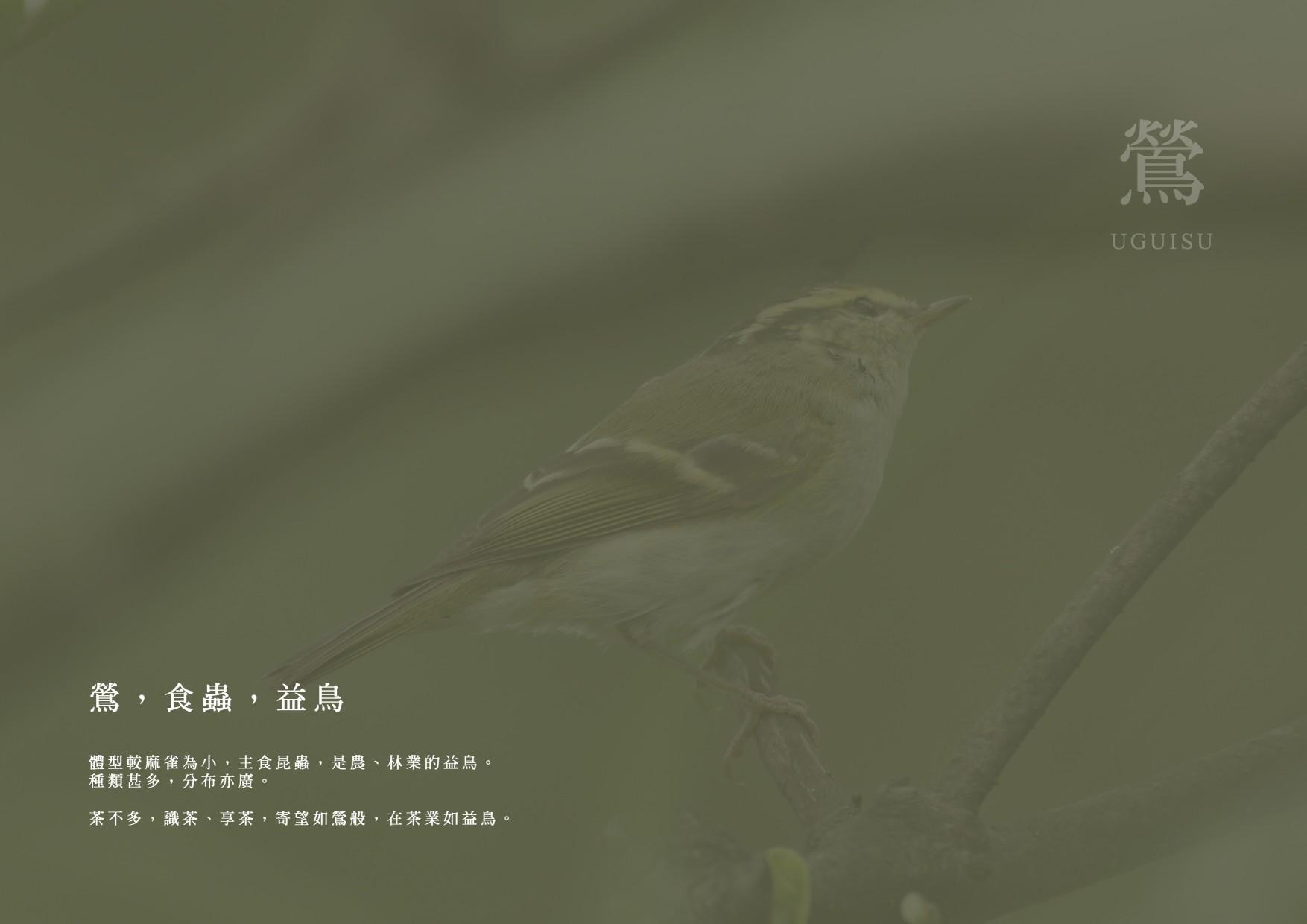 茶不多先生客製化網站設計主視覺-鯊客科技SEO優化網站設計公司